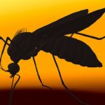 Kes Zika Dilaporkan Di Pahang?